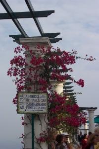 Capri 11-1-05 11